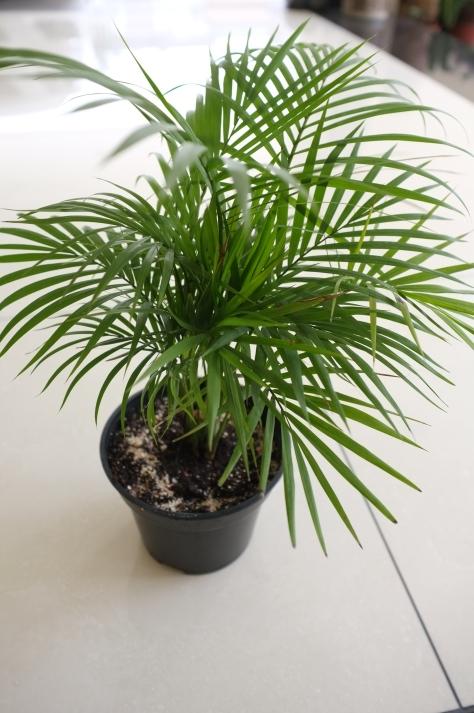 bamboo-palms